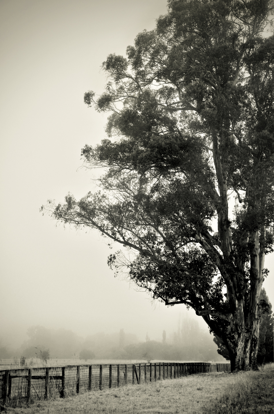 Heather Summerz | Towering Eucalyptus